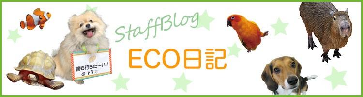 ECO日記 (エコ・コミュニケーション科)